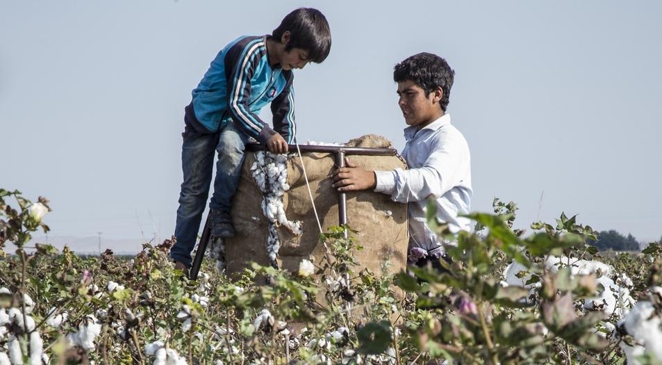 Arbeitende Kinder auf einer Plantage in der Türkei